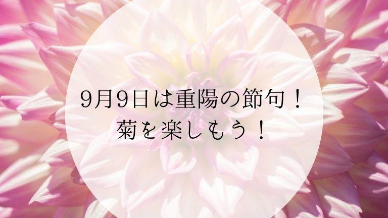 9月9日は重陽の節句!菊を楽しもう!