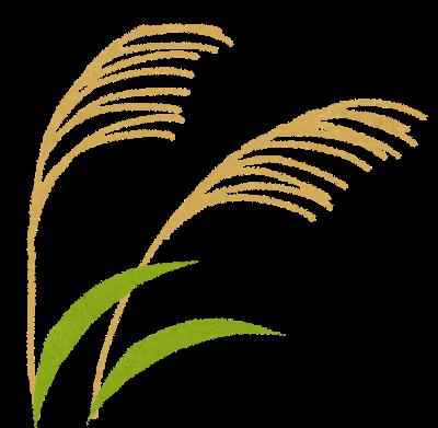 秋の七草、尾花(すすき)